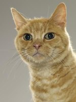 Cats with kidney failure should be given special care with diet.