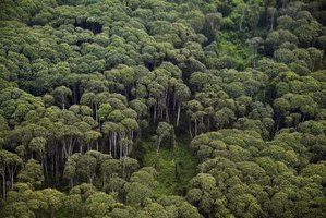 Forests provide homes for wildlife and medicinal plants.