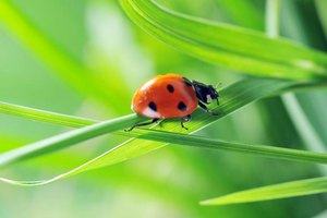 Ask your guests to balance toy ladybugs on a blade of grass.