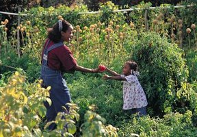 Companion planting uses space efficiently and yields tasty crops.