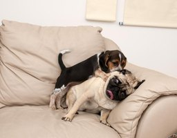 If pets are allowed on your leather furniture, protect the seat from scratches with a throw or blanket.