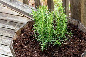 Plant rosemary in a container on the deck so it's close to your kitchen.
