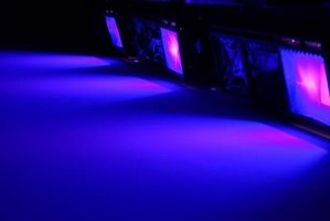 Only a black light will bring out the vibrant colors of your GloFish.