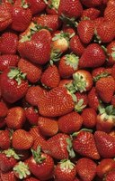 Strawberries must be cleaned prior to freezing.
