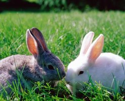 Rabbits are relatively quiet compared to other pets.