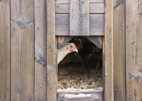Chickens need space to exercise, nest, and roost.