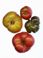 Tomato, a staple of many culinary traditions, is an herb of the nightshade family.