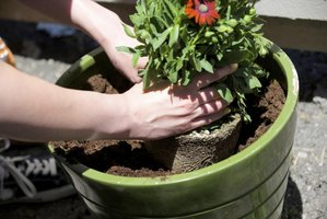A woman plants a flower in a green pot.