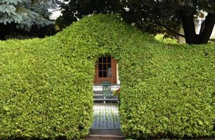 Cedar hedges provide privacy and help reduce noise.