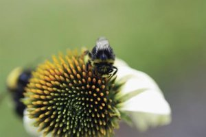 Bees can be pests in your garden and yard.