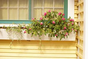 Cedar and fir are durable choices for window and yard planter boxes.