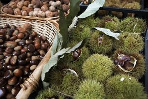 Chestnuts have been grown in the Mediterranean for at least 3,000 years.