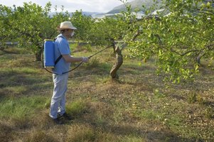 Man spraying fruit trees.
