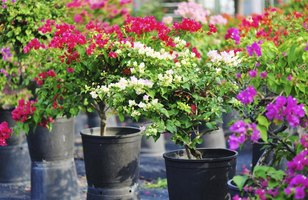 Planting in pots provides an easy way to move plants indoors for winter.
