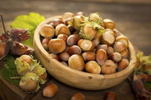 Hazelnuts grow inside fringed husks.