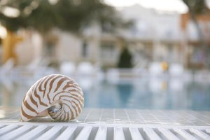 A close-up of a seashell at the edge of a swimming pool.