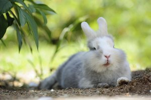 Image result for cool rabbit