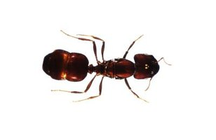 There are nearly 9,000 species of ants in the world.
