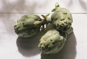 Harvest artichokes when the leaves are compact and tight against the bud.