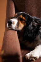Radio noise can drown out distractions outside so your pet can relax.