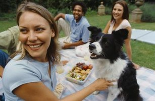 A group of friends and a dog having a picnic in the yard.