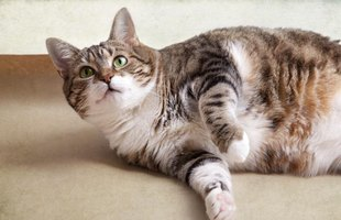 "In cats diagnosed with chronic pancreatitis, symptoms might ""wax and wane."""