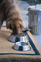 The CDC discourages feeding raw foods to pets to avoid the spread of harmful bacteria.