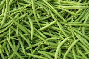 Your garden's crop of green beans should be blanched before freezing.