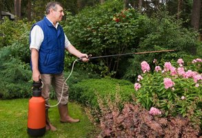 Man spraying flowers with pesticide