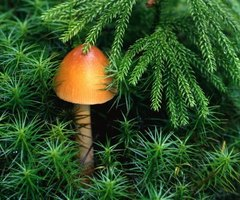 A toadstool set among dwarf plants created a whimsical, enchanted setting.
