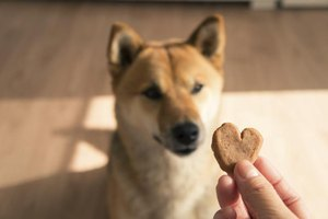 A snack between meals can help keep a dog's glucose level from becoming too low.