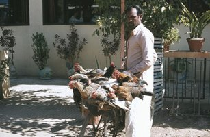Visitors to India should avoid contact with chickens.