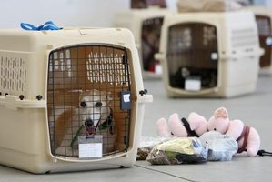How to Size Dog Crates