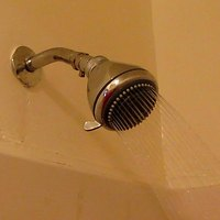 What Causes Tiny Worms In The Shower Tiles Ehow