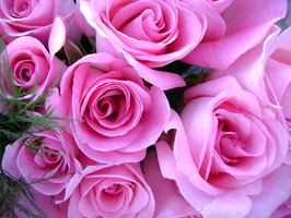 About Growing Roses Commercially