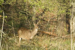 There are several options to finance the purchase of Wisconsin hunting land.