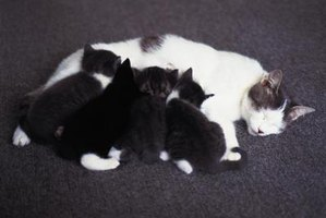 Newborn kittens can't even eliminate without mama's assistance.