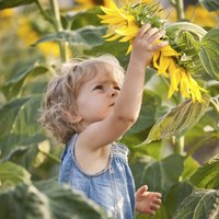 The extra-large size of sunflower blossoms amazes kids.