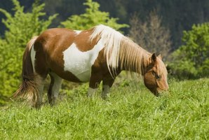 What Makes a Horse Eat His Own Manure?