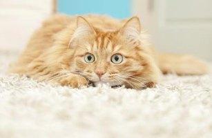 How To Fix Carpet Cat Scratched