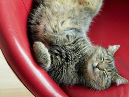 How To Repair Cat Scratches On Leather Furniture Ehow
