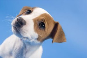 Why Do Puppies Want to Get Into a Cat Litter Box?