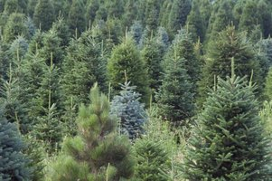 U.S. Government Grants for Tree Farms