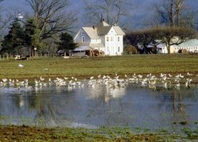 How to maintain a farm pond 8 steps ehow for Farm pond maintenance