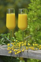 Two sparkling mimosa glasses.