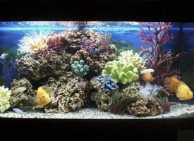 How to eliminate odor from a fish tank ehow for Cleaning fish tank with vinegar