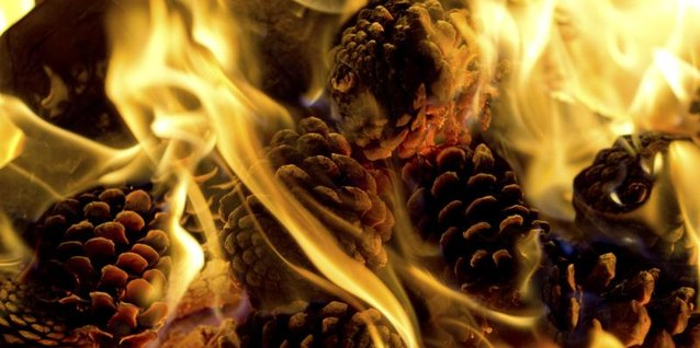 How to Make a Pine Cone Fire Starter