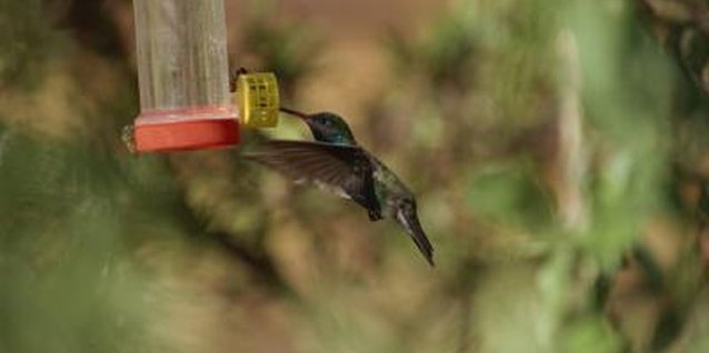 The Best Place to Put Hummingbird Feeders in the Yard