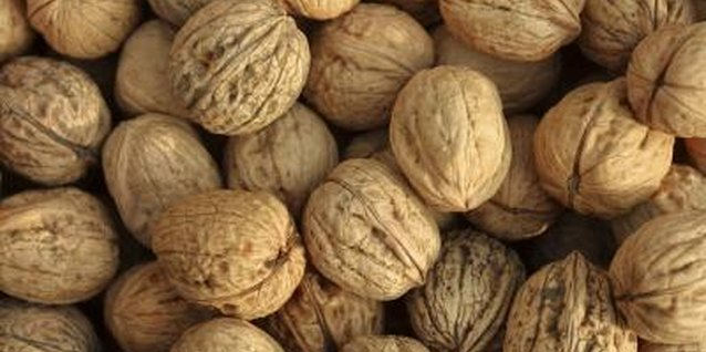 Walnuts can easily be grown from seed, but the best quality nuts are produced on grafted trees.