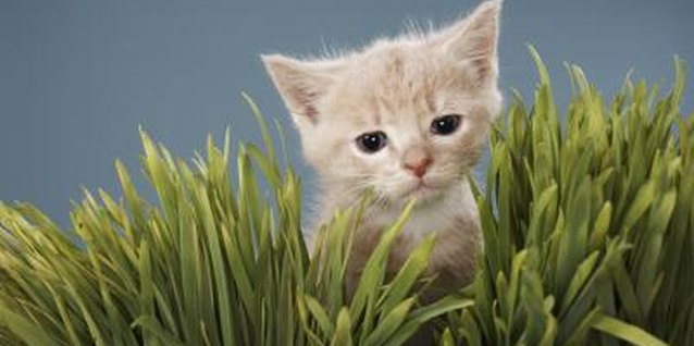 Cats enjoy eating plants, including grass and spider plants.